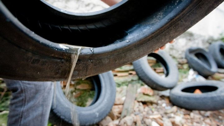 Não utilize armadilhas caseiras para combater o Aedes aegypti