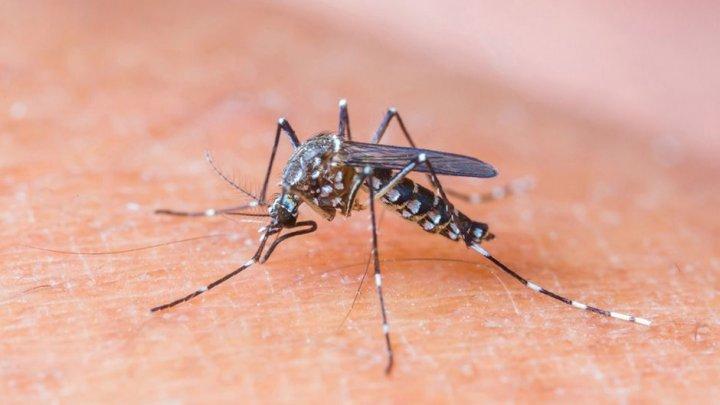 Dados atualizados da Dengue em Chapecó (29/02)