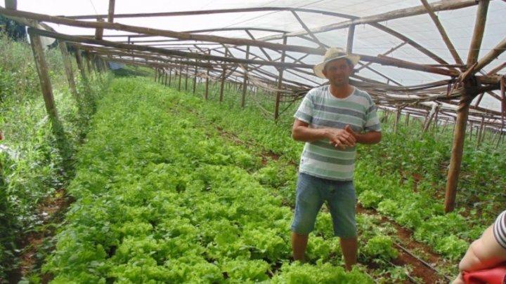 Prefeitura promove dia do alimento orgânico