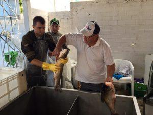 Produtores de Chapecó comemoram resultados da Feira do Peixe