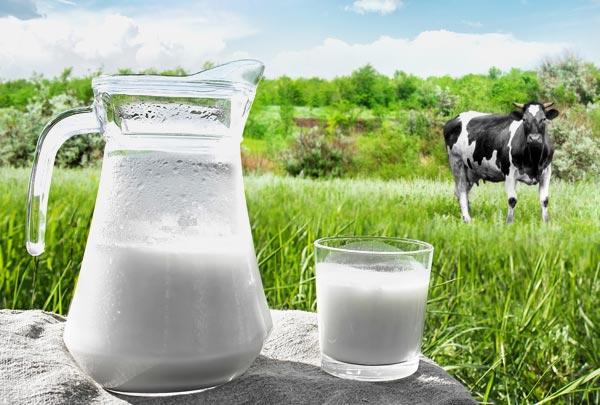 Santa Catarina quer produzir leite tipo exportação