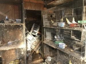 Polícia Ambiental apreende mais de 240 animais por maus tratos