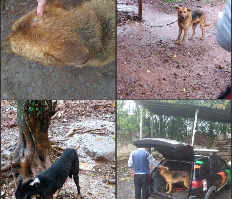 Polícia Civil resgata animais vítimas de maus tratos em Pinhalzinho