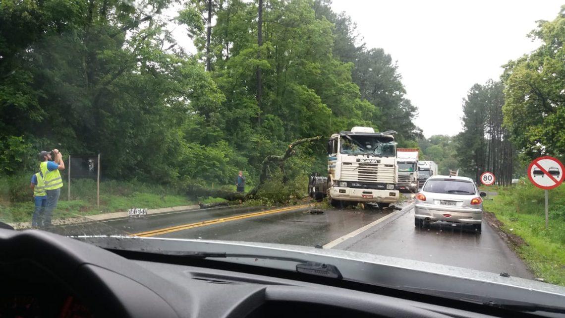 Caminhão bate em árvore que caiu na BR-282 em Chapecó