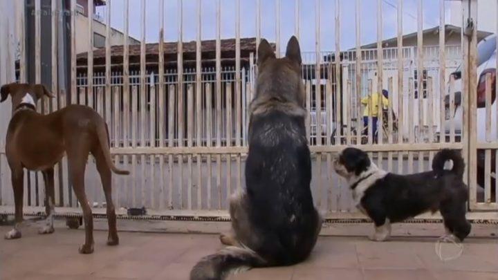 Justiça determina que casal pague multa à vizinha por latido dos cães