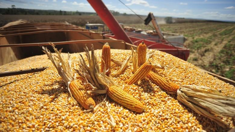 Santa Catarina amplia em 10% a produção de milho