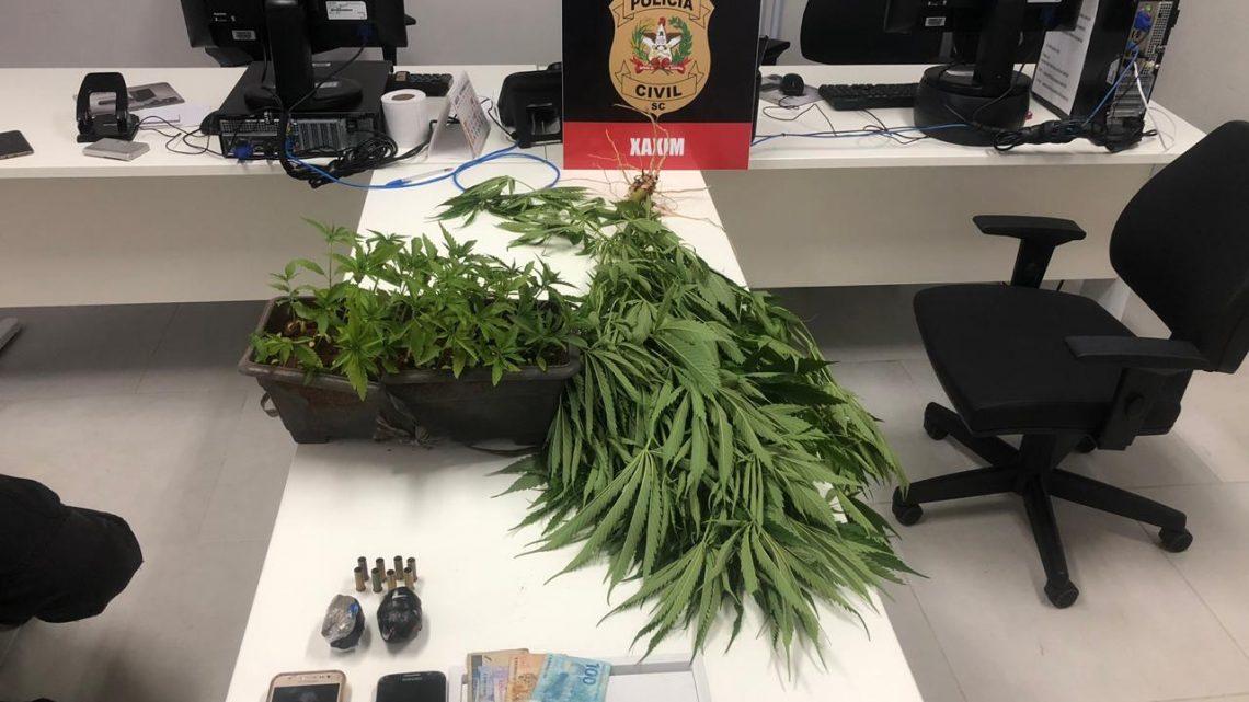 Polícia Civil de Xaxim prende irmãos com 40 mudas pé de maconha