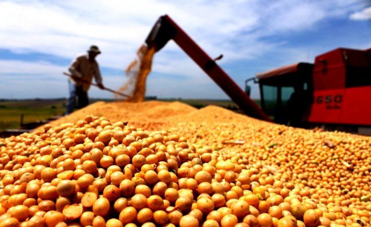 Santa Catarina tem exportação recorde de soja