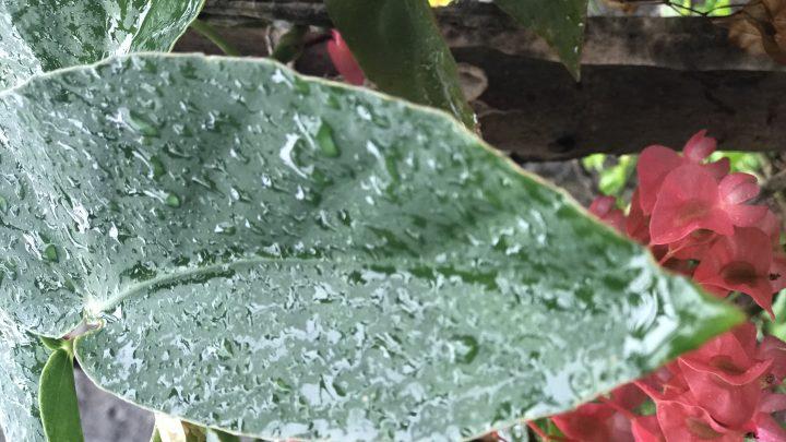 Domingo deve ser de chuvas em todas as regiões de Santa Catarina