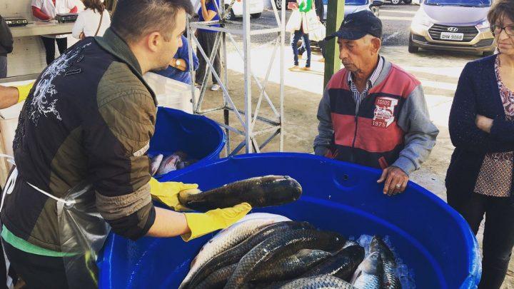 Produtores se preparam para a Feira do Peixe Vivo em Chapecó