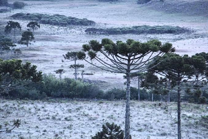 Massa de ar frio vai derrubar temperaturas e provocar geadas em Santa Catarina