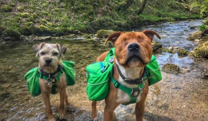 """FOTOS: conheça o cachorro cego que tem um inseparável """"cão-guia"""" e companheiro de aventuras"""