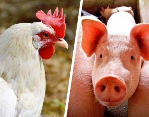 Santa Catarina amplia em 12% as exportações de carnes em 2019