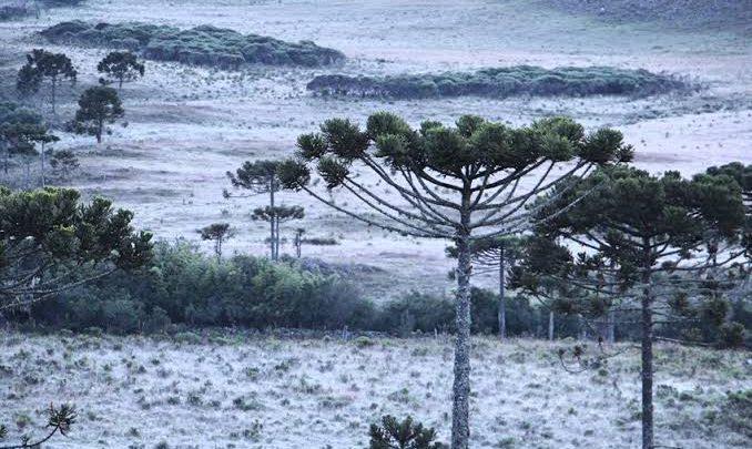 Previsão do tempo marca geada frio intenso no sul do Brasil