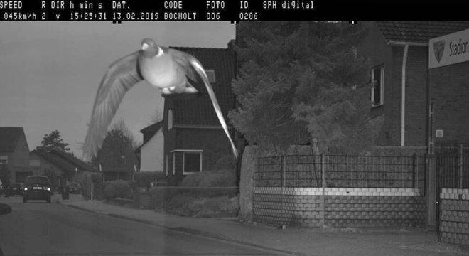 Pombo 'ultrapassa limite de velocidade' e é fotografado por radar
