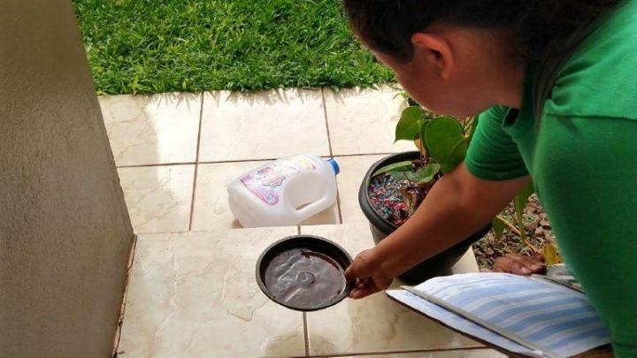 Chapecó registra 959 focos do mosquito Aedes aegypti