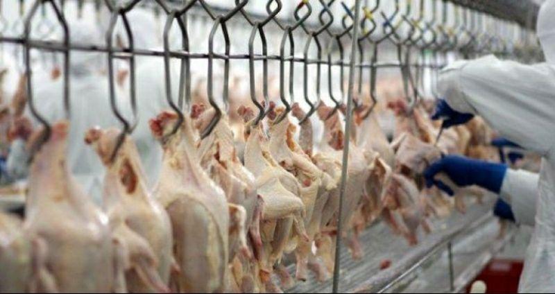 Santa Catarina é o maior exportador de carne de frango do Brasil