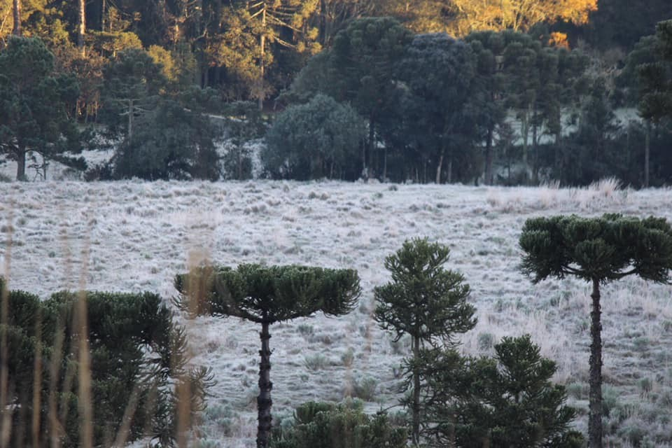 Frio perde força no decorrer da semana em SC