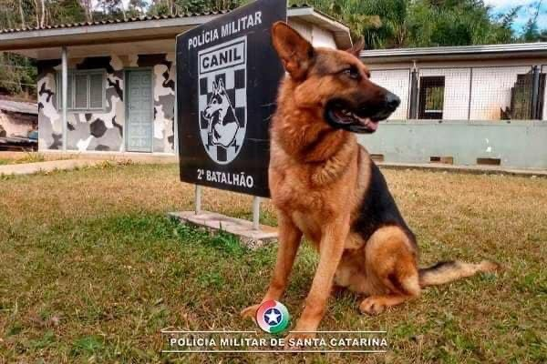 Morre o cão Max da Polícia Militar de Chapecó
