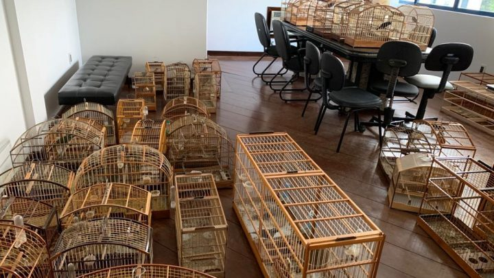 Polícia Civil apreende 37 pássaros irregulares em residência no Sul do Estado