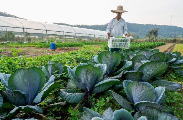 Agricultura familiar responde por metade do faturamento da agropecuária catarinense