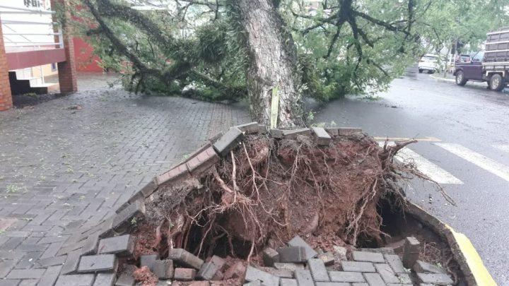 Árvore cai sobre residência em Itá-SC