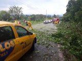 Árvores caem em cima de veículo na SC-283 em Seara