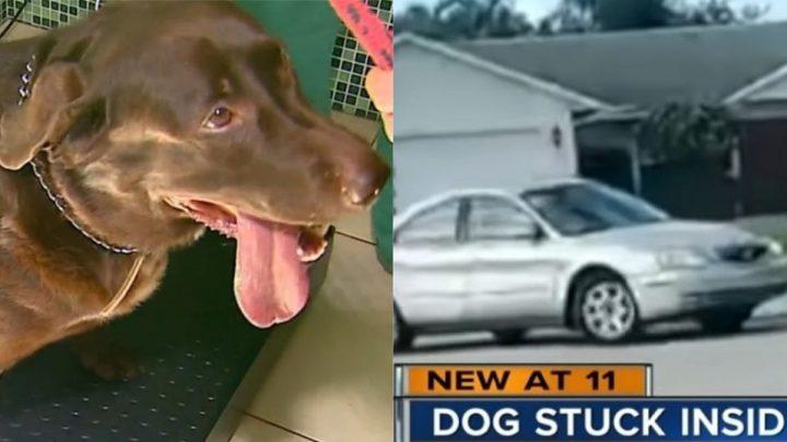 Cão dirige veículo por cerca de uma hora nos Estados Unidos