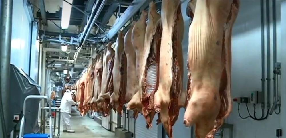 Exportação de carne suína em SC cresce 14,3% em 2019 e bate recorde histórico
