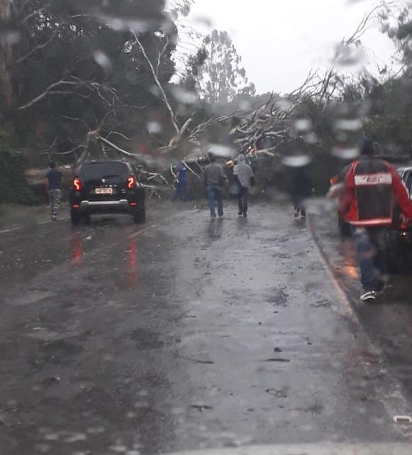 Caminhão é atingido por árvore que foi arrancada pelo vento na BR-153 em Irani