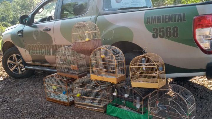 Polícia Ambiental apreende oito aves silvestres aprisionadas irregularmente em Nova Itaberaba