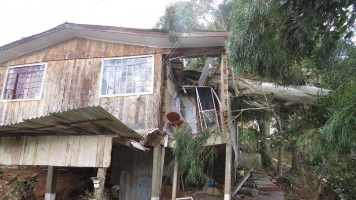 Vento derruba árvore sobre residências em Herval d´Oeste