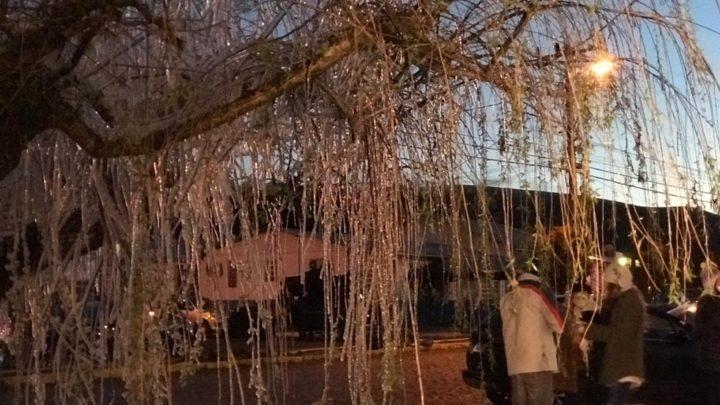 Frio em SC: Sexta-feira tem -8ºC, geada, árvores congeladas e chance de neve