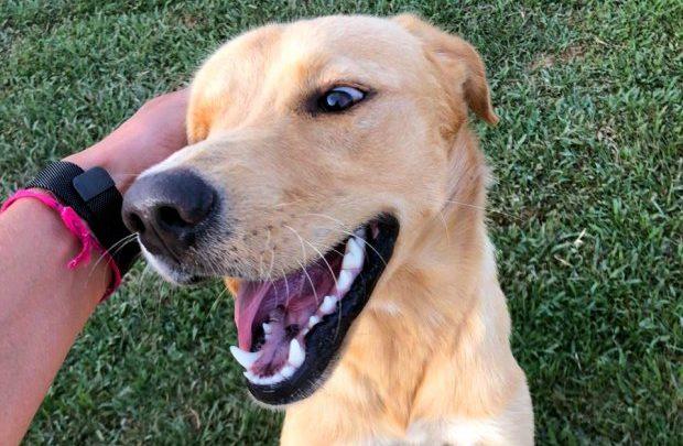Santa Catarina sanciona lei que autoriza visita de animais domésticos a pacientes internados em hospitais