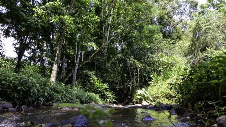 Empresa, biólogo e servidor do IMA são condenados por crime ambiental em Chapecó