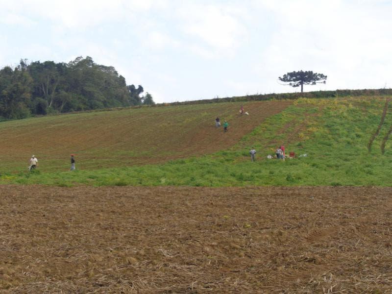 Operação flagra trabalho escravo em plantação de cebola em SC
