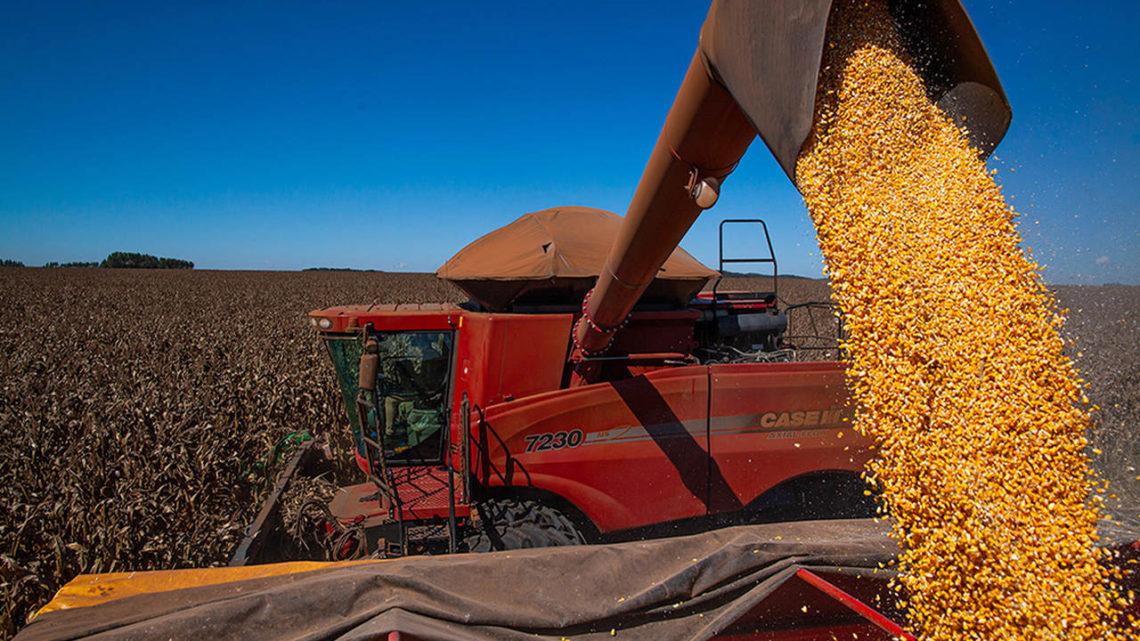 Aumentar a produção de milho é desafio e prioridade em SC