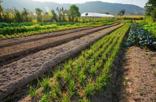 Agricultura inicia distribuição de calcário para aumentar a produtividade das lavouras