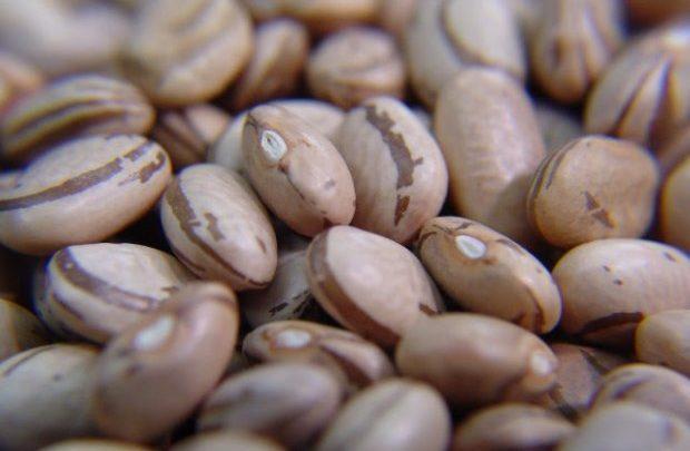 Boletim Agropecuário de fevereiro revela bons preços pagos aos produtores de feijão e soja