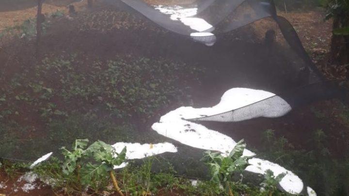Chuva de granizo causa estragos em propriedades do interior de Seara