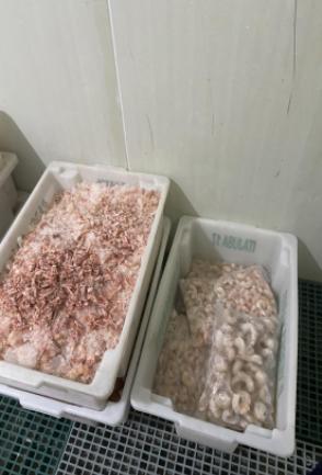 Ação de fiscalização apreende 3,6 toneladas de pescados impróprios ao consumo e interdita estabelecimento clandestino em SC