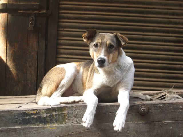 Chapecó lança edital para hospedagem e cuidado de cães abandonados
