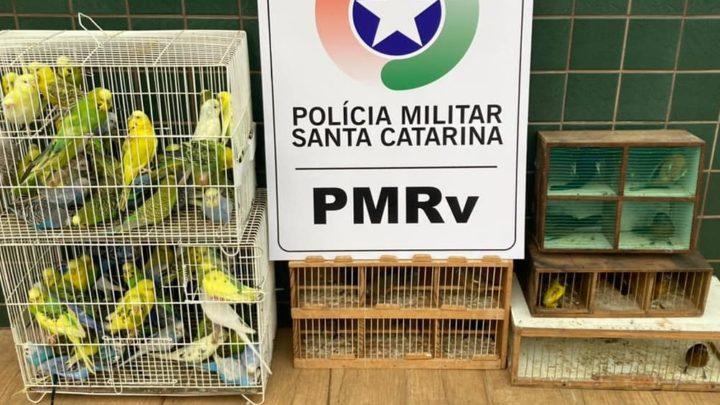 Pássaros silvestres são apreendidos na SC 480 em São Domingos