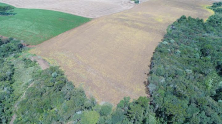 Ações da PMA constataram quase 70 hectares desmatados em SC