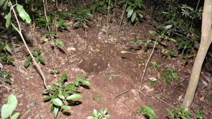 Feto é encontrado enterrado em matagal no interior de SC