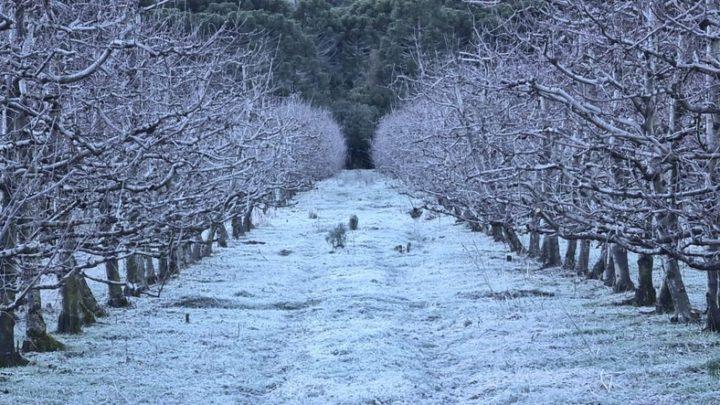 Massa de ar polar chega com chance de neve e mínimas entre -8°C e -10°C em SC