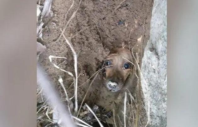 Cachorrinha é encontrada viva após ficar dois dias enterrada em SC