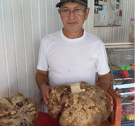 Padeiro colhe batata-doce gigante com 11,6 kg em SC