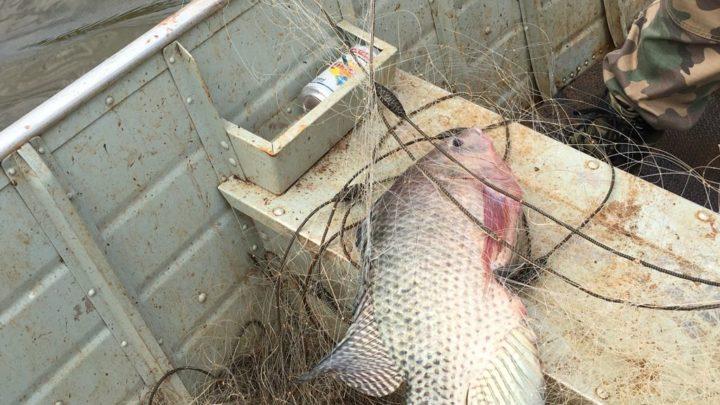 Polícia Militar Ambiental prende homem por pesca irregular em Guatambu