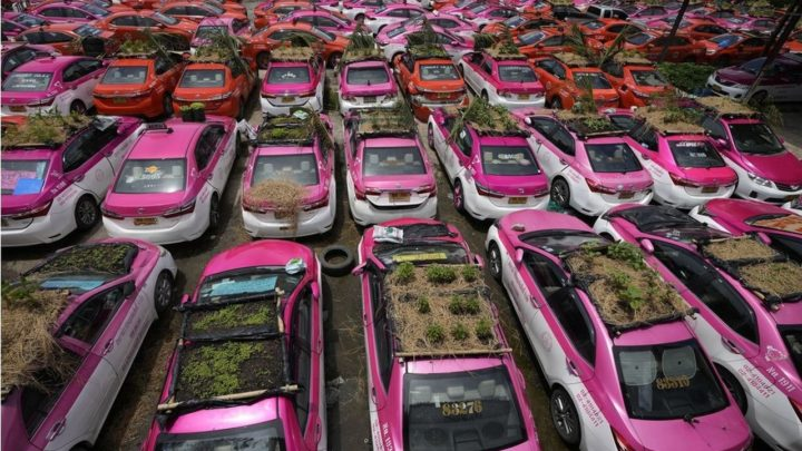 Táxis viram hortas após queda na demanda durante pandemia